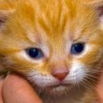 dyrenes hus, dyrebeskyttelsen oslo og omegn (spca)