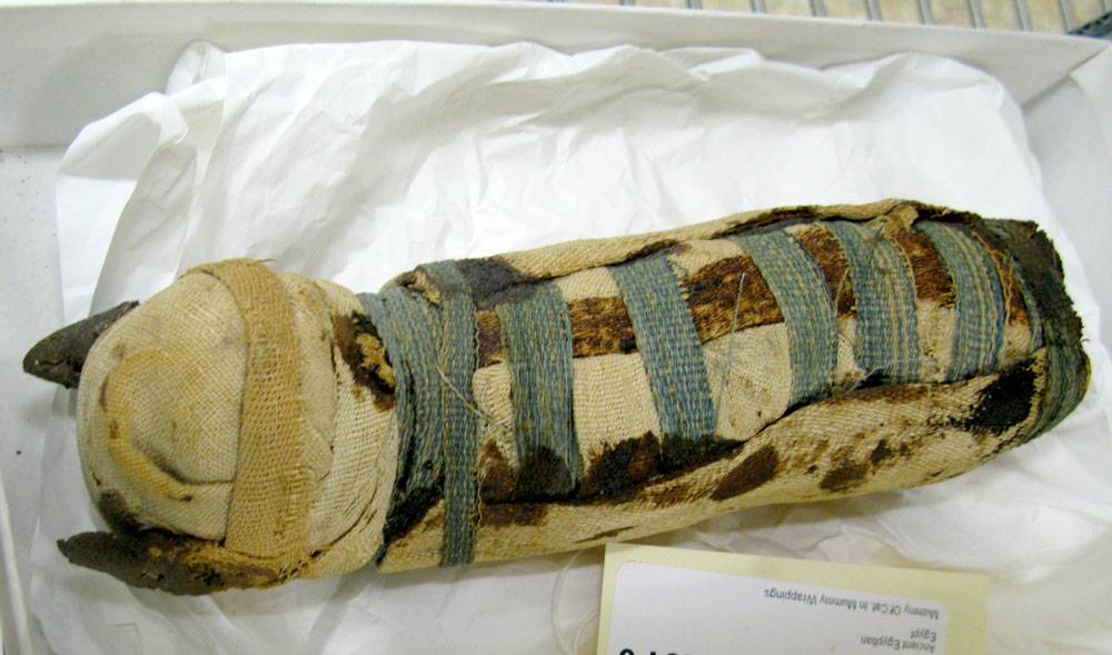 cat mummy, national museum of natural history, DC